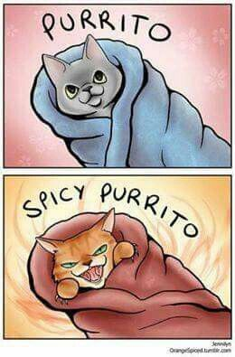 """This is what my cat looks like if you try to wrap a blanket around her (the """"spicy purrito"""")."""