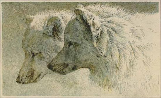 art photo: Art Painting Of Two Wolves ArtPaintingOfTwoWolves.jpg