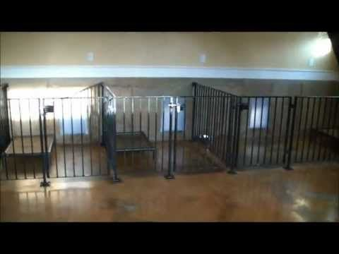 Indoor dog kennel designs and dog boarding kennels on for Indoor facility design