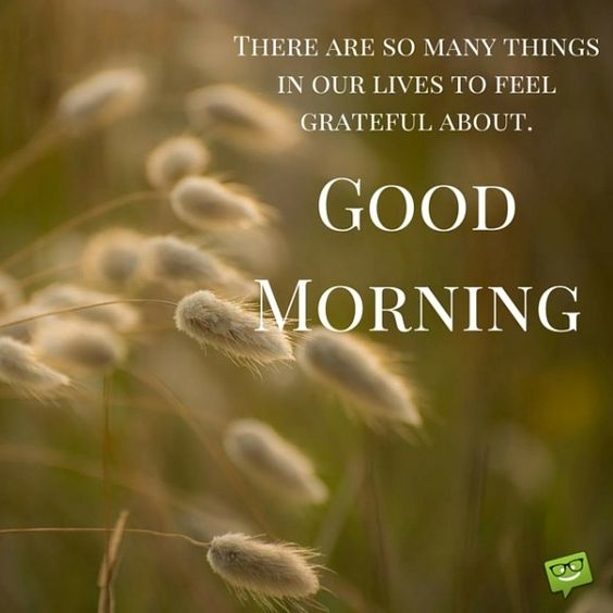 There are so many things in our lives to feel grateful about. Good Morning.