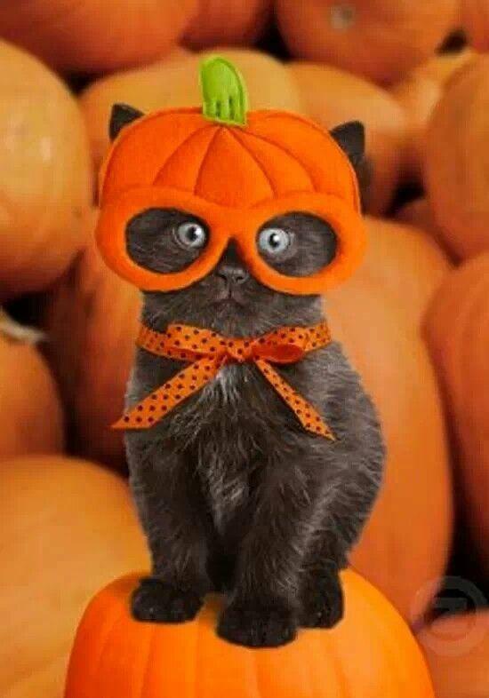 "* * "" I hates Halloweenz, candy, and nowz I hates YOO."":"