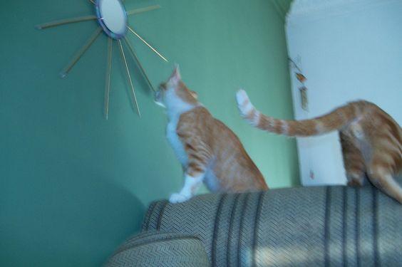 Gatos brincando no sofá
