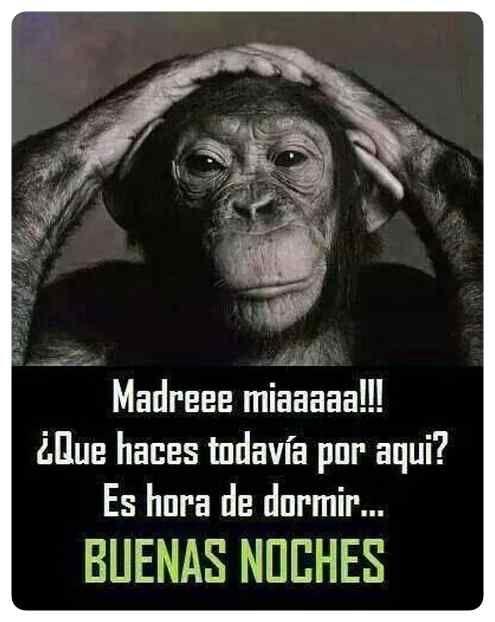 Mejores 40 Imagenes De Buenas Noches Chistosas Mejores Imagenes Good Night Quotes Humor Funny Memes