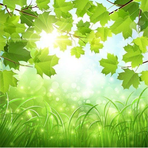 Green Natural Background Natural Background Free Background Images Nature Backgrounds