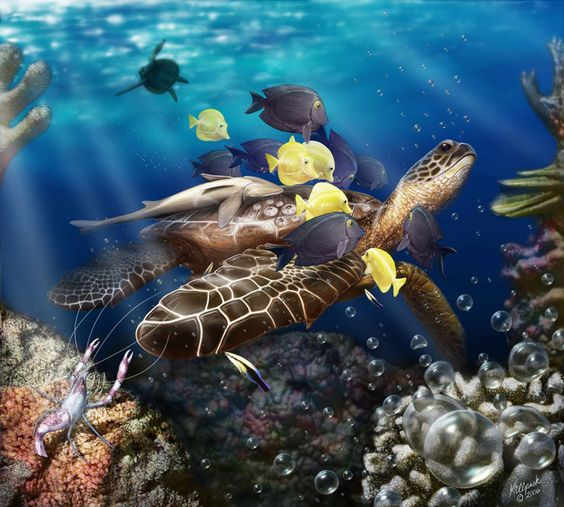 Fish turtles and relationships on pinterest for Examples of fish
