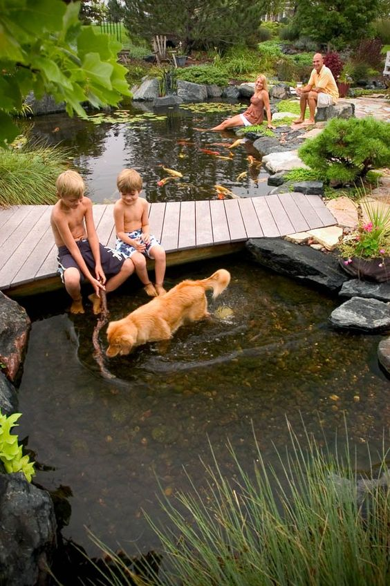 Tips for designing a backyard pond building moxie for Building a backyard pond