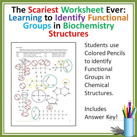 Printables Functional Groups Worksheet biochemistry functional groups activity for high school biology this lesson really helped my students learn their in a fun way visual titled scariest worksh