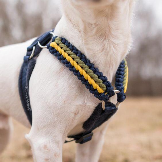 Dùng dây sinh tồn để làm dây đeo cổ cho thú cưng