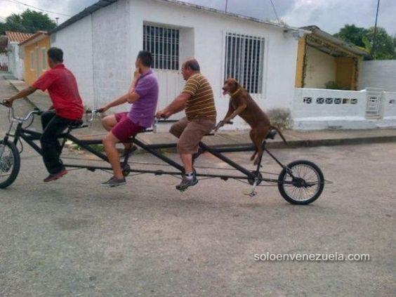 Tres Personas Y Un Perro En Bicicleta - soloenvenezuela