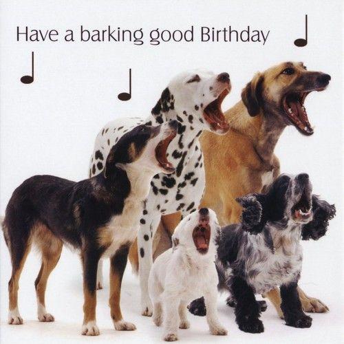 Funny Dogs Barking Happy Birthday