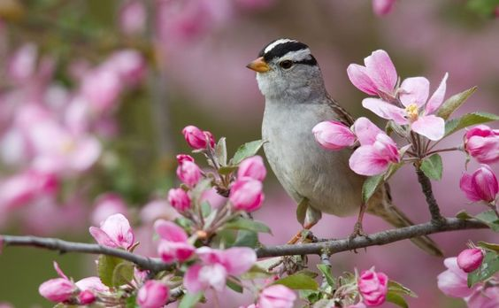 Spring HD Desktop Wallpaper | Spring Animal Desktop Backgrounds HD 7704 - HD…