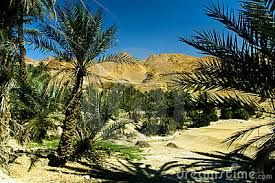 oasis en el desierto - Buscar con Google