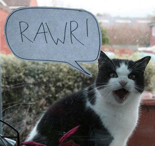 Gene Hackmans cat.....he's just as delightful as Gene is......