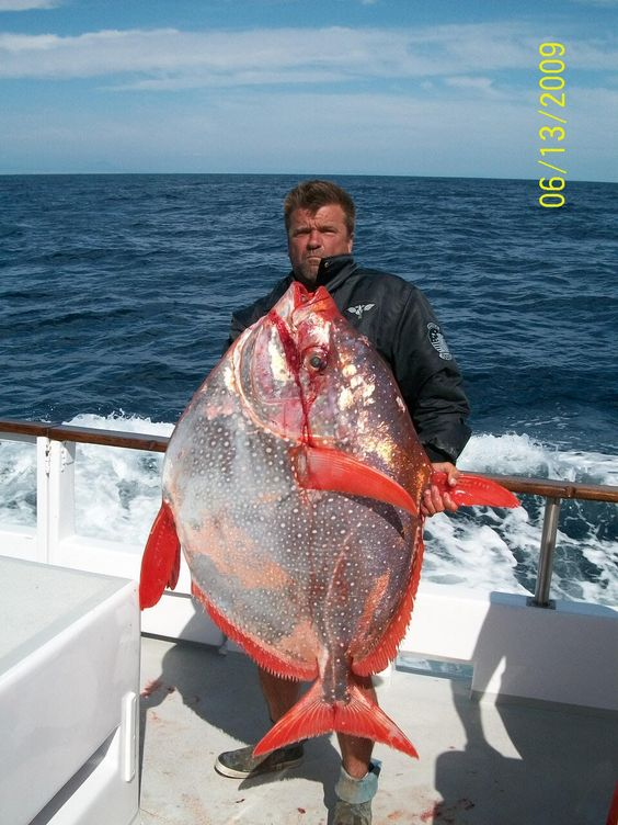 Fish look at and google on pinterest for Weird looking fish