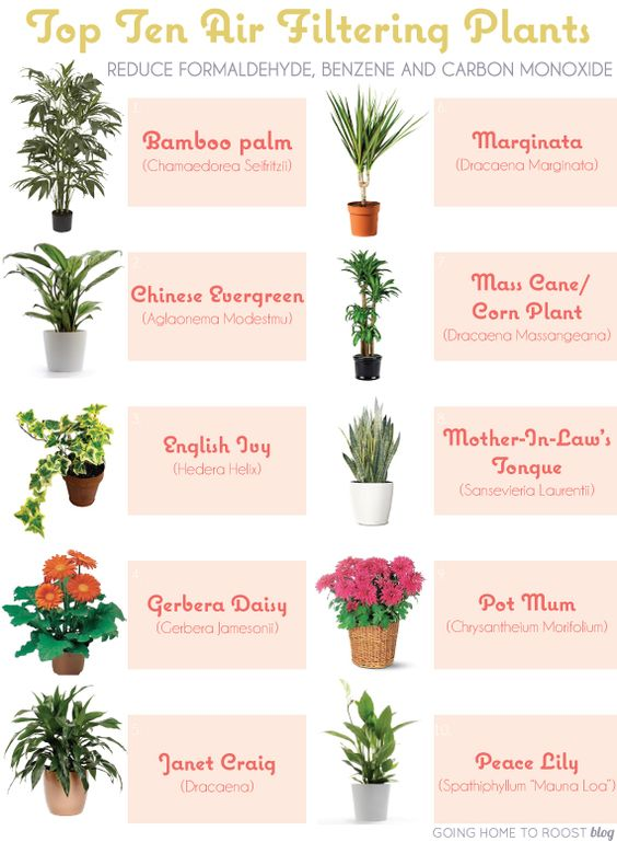 Top 10 air filtering plants place 1 6 plant per 100 sqft for Air filtering plants
