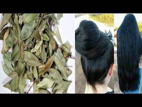 عشبة لو علمت النساء بمنافعها لتطويل الشعر وتكثيفة لاشتروها بالذهب لن تصدقي طول شعرك بعد استعمالها Youtube Plants