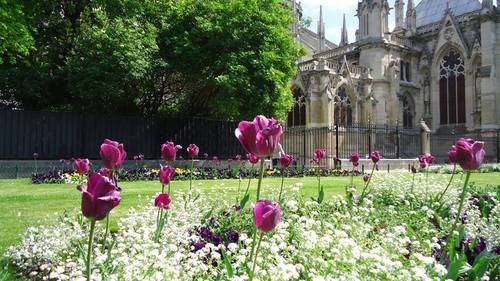 Jardines de Notre-Dame