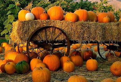 Orange, orange, orange!! autumn