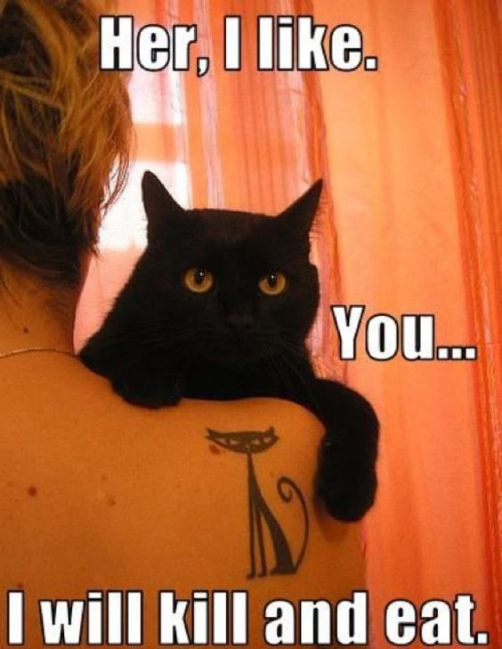 Kitty loves his cat lady !: