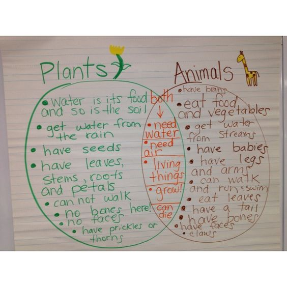 comparing living things plants and animals venn diagram greenbeankinderga k 2 science. Black Bedroom Furniture Sets. Home Design Ideas