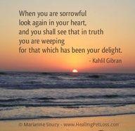 Coping With Death Quotes Amazing Will The Grief After Pet Loss Ever Go Away  Pinterest  Pet Loss