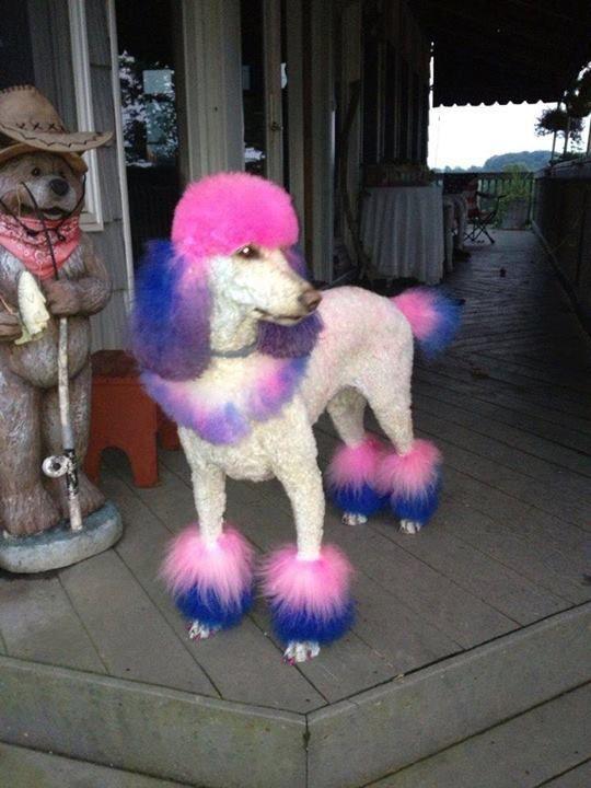 Repinned More Creative Grooming In 2020 Creative Grooming Poodle Grooming Dog Grooming