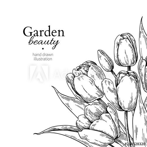 Tulip Flower And Leaves Drawing Border Vector Hand Drawn Engraved Floral Frame Drawing Borders Tulip Drawing Flower Sketches
