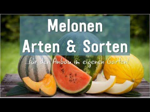 Melonen Arten Und Sorten Fur Den Anbau Im Eigenen Garten Will Man Melonen Im Eigenen Garten Anbauen Gibt Es Bei Der Aus Melonen Arten Melonen Melonen Sorten