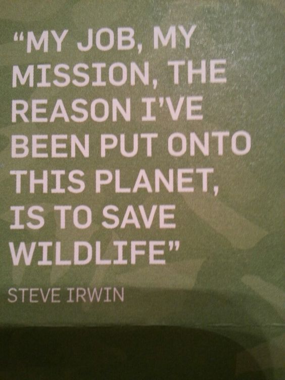 STEVE IRWIN saved wildlife... And so should YOU, everyone has a reason for being on this Earth.... What's your reason? In memory of him, please join the all new group board on my page Wildlife Earth.