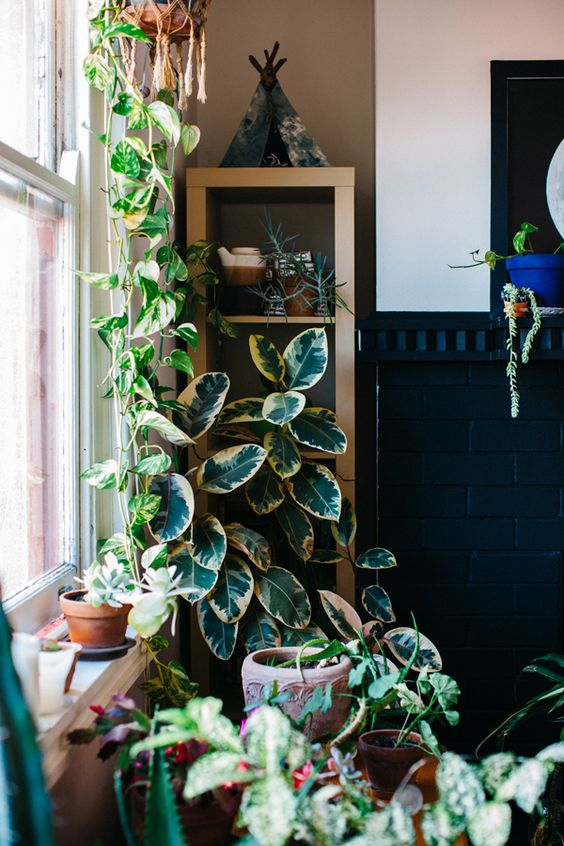 The home of Nicole Valentine Don; an indoor jungle! House plant series by: Luisa Brimble