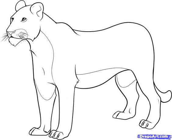 how to draw a linioness