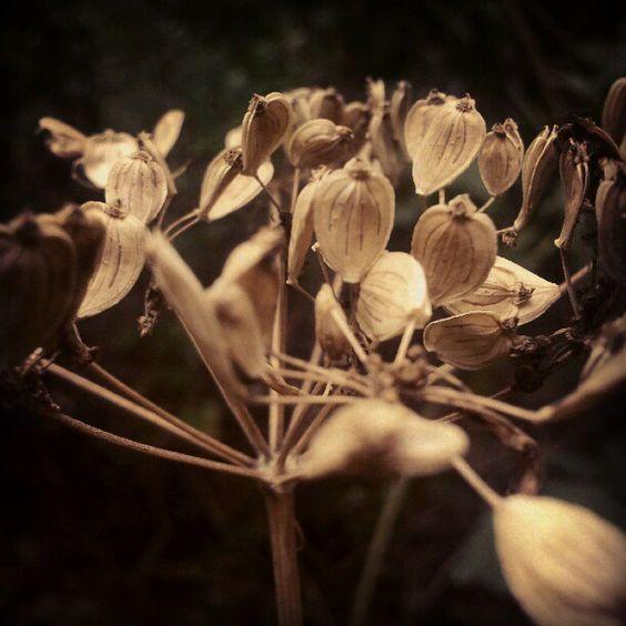 Termések. Kis-Hárs-Hegy, Budai-hegység #flowers #flower #nature  #budai_hegyseg Photo by blogisztan Photo by blogisztan
