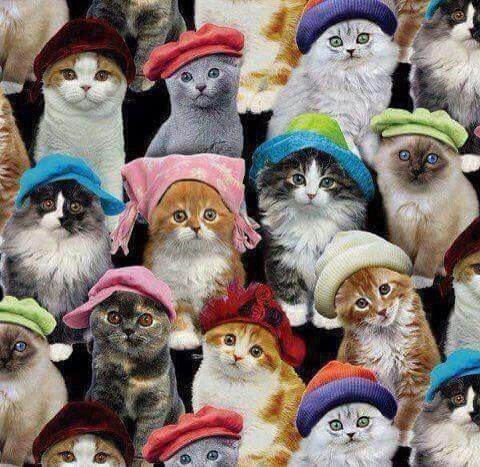 Many cats in hats
