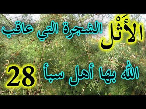 العشبة 28 من السلسلة التعريـفـية بالأعشاب الموجودة في المغرب شجرة الأثل Youtube Neon Signs Neon Arabic Calligraphy