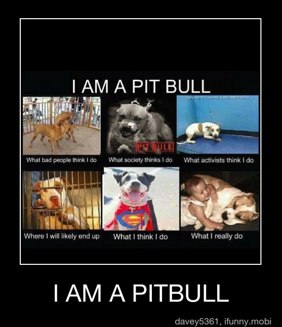 What exactly does ALL pit bull breeds mean?