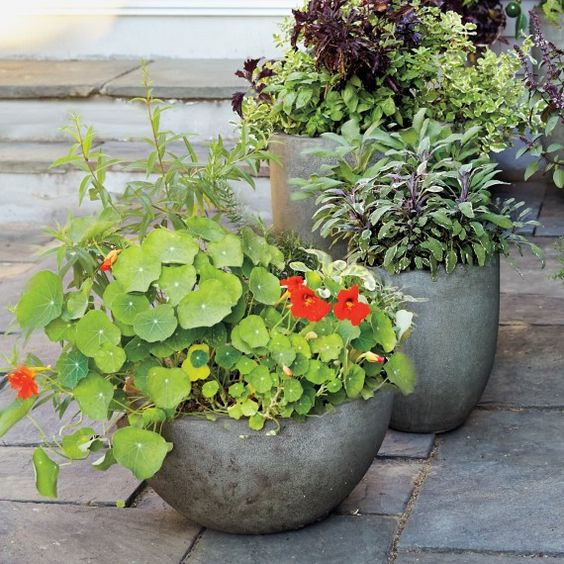 Herb pots Gardens and The ojays on Pinterest