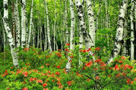 Vert forêt bouleau