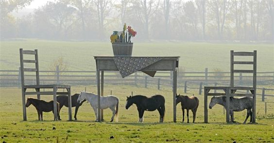 According to Horse Scene Magazine, the owners of these horses were denied a permit to build a shelter, sooooo they built a table and chairs instead! 8-)