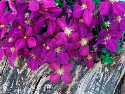 fondos de flores bonitas preciosas