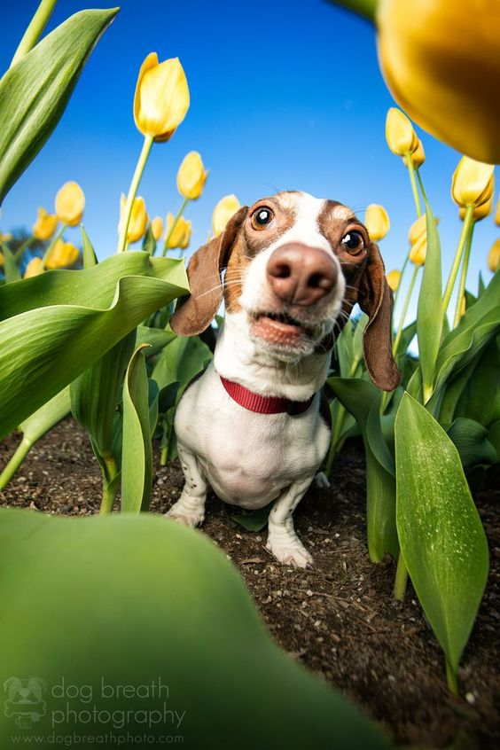OMG! This tulip patch is like a freaking maze! I can't find my way OUT! Mommmmmmy!!!