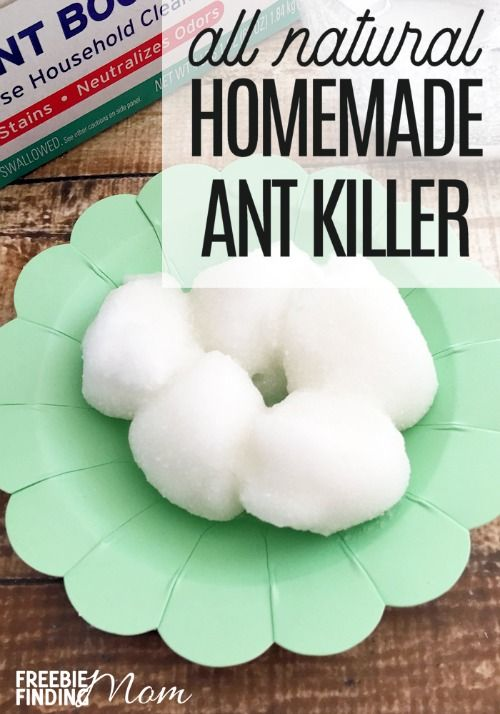 Are you hosting some uninvited guests at your home? I'm talking about ants. Eliminate these pests with a natural pesticide that is non-toxic and safe for your family and pets by making this homemade ant killer recipe. You need just sugar, Borax, water, cotton balls, and a small plate to learn how to kill ants naturally. In only a few minutes you have natural pest control!