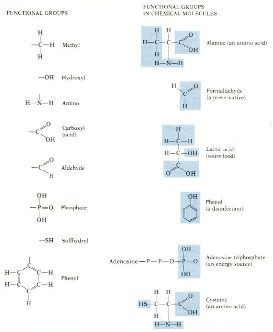 Functional Groups Biology i shall elucidate – Functional Group Worksheet