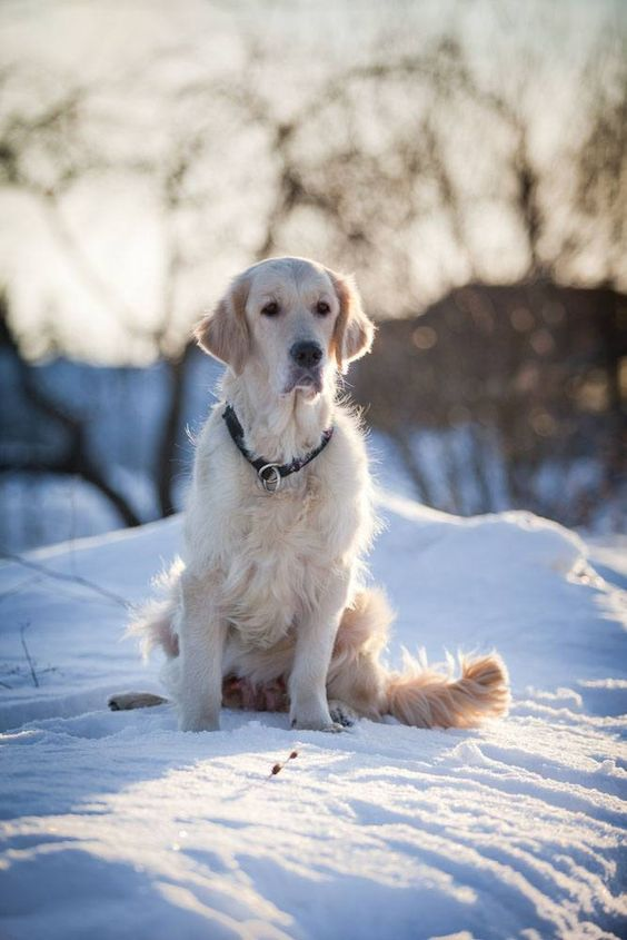 Older, adopted or rescued Golden Retrievers deserve only the best Golden Retriever names like these>>> http://www.dog-names-and-more.com/Golden-Retriever-Names.html
