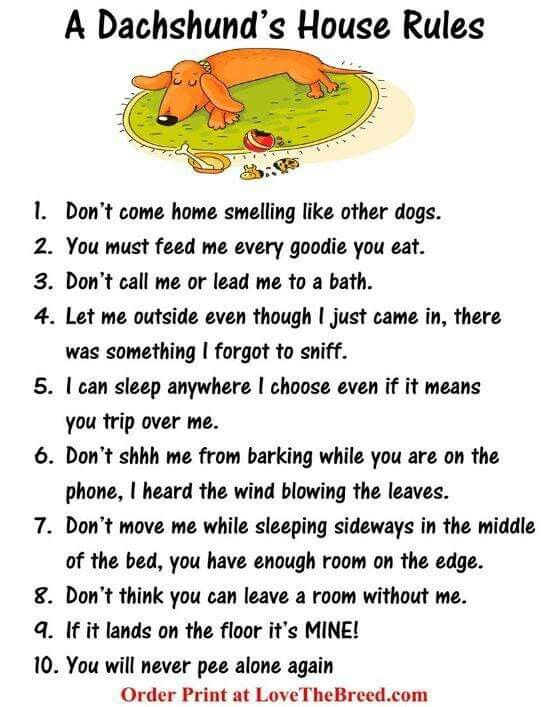 Dachshunds Image By Leslie Jacques House Rules Dachshund Dont