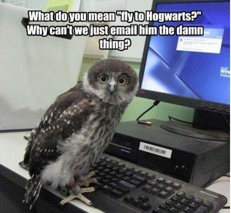 Poor Hogwarts owls.