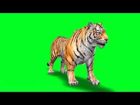 15 Green Screen Animals Ideas Greenscreen