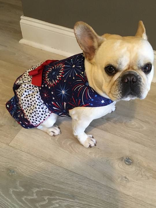 French Bulldog Frenchie Red White And Blue Patriotic Dress