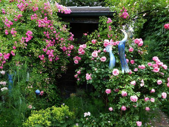 Rosen am Gartenhaus