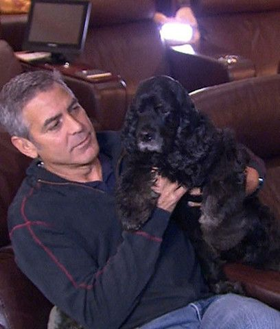 Photos Of Celebrities Who Have Rescued Their Pets - The Dog Bar – The Dog Bar
