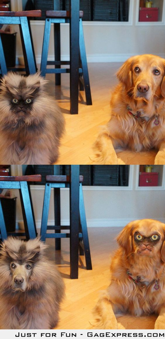 Funniest faceswap ever